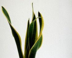 15 piante depurative per combattere l'inquinamento domestico