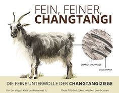 """Check out new work on my @Behance portfolio: """"Chantangi Wool, a hairy infographic"""" http://be.net/gallery/52229793/Chantangi-Wool-a-hairy-infographic"""