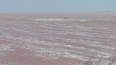 Sivash, also known as the Rotten Sea, is a large system of shallow lagoons on the west coast of the Sea of Azov in the Crimean Peninsula, Ukraine. Sea Of Azov, Healing Clay, Pink Lake, Pink Photo, Pink Garden, The Weather Channel, Around The Worlds, Wikimedia Commons, Shallow