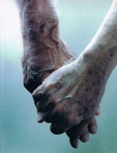 """El amor durará tanto como lo cuides,  y lo cuidarás tanto como lo quieras..."""""""