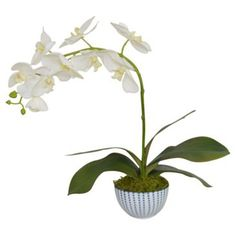 Check out this item at One Kings Lane! White Phal Orchid in Planter, Faux