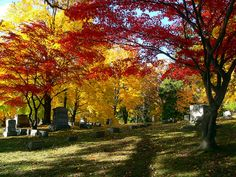Mt Hope Cemetery Rochester, NY-It's really this beautiful!