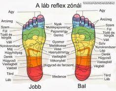 A láb reflexzónái Kidney Cancer, Lunge, Foot Reflexology, Muscle Anatomy, Massage Benefits, Lymphatic System, Cancer Treatment, Massage Therapy, Health Fitness