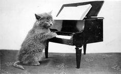 Kitten Playing Piano by State Historical Society of North Dakota, via Flickr