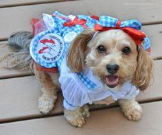 memorial day dog costume