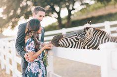 zebra engagement