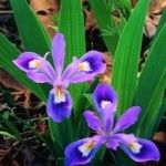 Native Plant Database »  Grow Native!