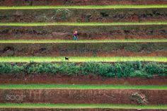 Rice Terraces Mu Cang Chai Vietnam by drjhnsn