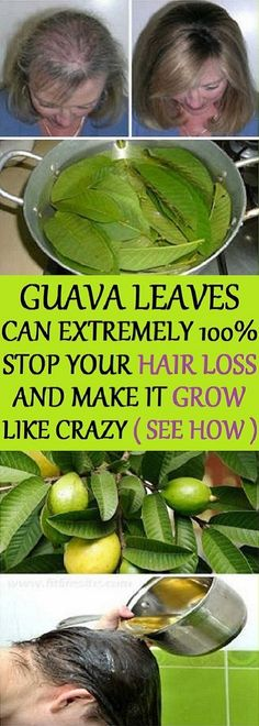 Remedies For Thicker Hair Hair – Guava leaves are a great remedy for hair loss. They contain vitamin B complex (pyridoxine, riboflavin, thiamine, pantothenic acid, folate and niacin) which stops the hair fall and promotes hair growth. Guava Benefits, Health Benefits, Natural Hair Care, Natural Hair Styles, Natural Shampoo, Natural Beauty, Beauty Care, Beauty Hacks, Beauty Secrets