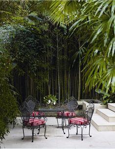 Stunning bambus garten zu hause wacshen lassen wald im hause