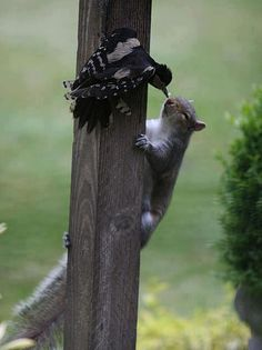 Sharing ... too cute! Sorry ~ Actually looks to me like the poor squirrel is gettin it on the nose, LOL!