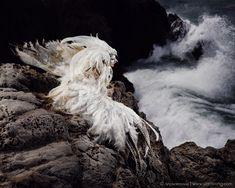 Photo by Benjamin Von Wong, Sutro Baths, SF, CAKa the bird woman, and the sea dragon