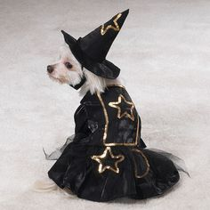 Little witch carnavalskleding voor honden