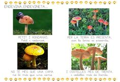 ENDEVINALLES TARDOR - Jessica Bujalance - Álbumes web de Picasa