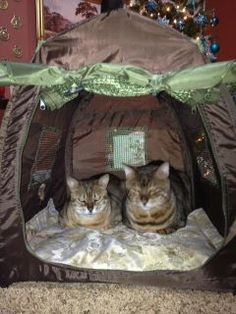 The fur kids go camping