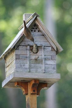 Wrens feeding in birdhouse