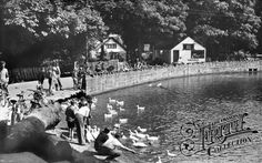 Raby mere duck pond
