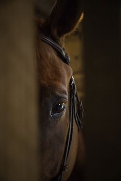 Intense by jamibrannen - 800 Horses Photo Contest