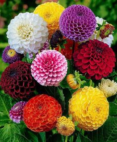 Dahlias. These come in a bazillion different colours. Tricky to grow lots of them but they could be included in a bunch.