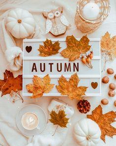 🔴🔵⚫ 📸photo by ✍🏻selected by Autumn Witch, Autumn Cozy, Autumn Flatlay, Orange Season, Autumn Illustration, Winter Love, Autumn Aesthetic, Fall Wallpaper, Autumn Photography