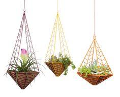 Hedge remet les suspensions de plantes à la mode   Décormag