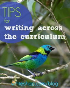 Writing becomes fun and meaningful when students can apply a writing lesson to history, literature, or science.