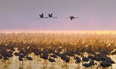 PIC BYThe flock of flamingos at Lake Nakuru in Kenya) - These extraordinary images bring a whole new meaning to the phrase pretty in pink. Captured congregating in their thousands, the brightly coloured birds are able to transform the skyline as far as the eye can see. Known for their vivid pink plumage, the long legged waders get their unique colour from the pigmentation found in the organisms they eat.