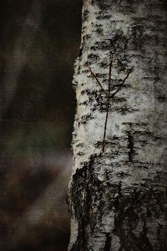 "Bland sorgsna träd och sovande troll VIII""Algiz""© Heathen Harnow - please do not remove credit Religion, Forest Bathing, Asatru, Witch House, Viking Age, Gods And Goddesses, Runes, Tattoo Inspiration, Dandelion"