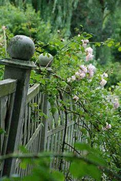 rose hedge, higgledy boundary fence