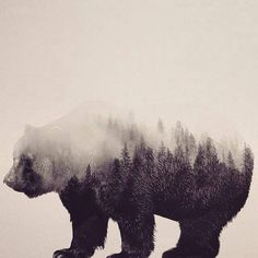 This would be bad ass. Trees in the shadow of a grizzly bear