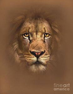 Watercolor Painting - Scarface Lion by Robert Foster