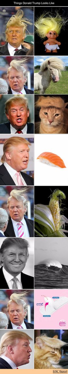 Funny pictures about Donald Trump Look Alikes. Oh, and cool pics about Donald Trump Look Alikes. Also, Donald Trump Look Alikes photos. Stupid Funny, Haha Funny, Funny Jokes, Hilarious, Funny Wife, Trump Funny, Laughing Funny, Man Humor, Memes Humor
