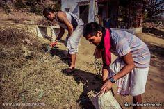 Indradyumna Swami Cleaning Sri Giriraj Hill 2013