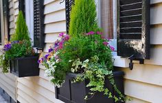 There are fabulous window boxes all around me here in Charleston, Ill share them with you, to get started - these are my own - more to come for-the-love-of-window-boxes