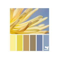 Design Seeds for all who color petalled hues ❤ liked on Polyvore featuring color schemes, design seeds, palette, color palette and colors