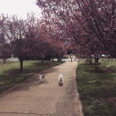 Springtime in Charlotte
