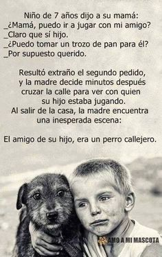 HAZLO!!!!!! Amor Animal, Mundo Animal, I Love Dogs, Puppy Love, Animals And Pets, Cute Animals, Good Day Quotes, Stop Animal Cruelty, Real Friends