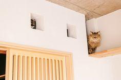 「いたずらがバレた時の猫の表情を御覧くださいいたずらがバレた時の猫の表情を御覧ください」のフリー写真素材を拡大