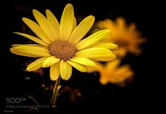 Natural beauty... Natural yellow by Louadfel