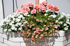 Green Garden, Garden Plants, Flower Window, Outdoor Planters, Window Boxes, Flower Boxes, Peach Colors, Container Gardening, Garden Landscaping