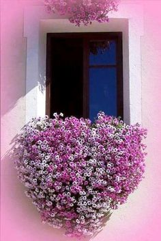 Window Boxes are like wearable art for your home. Here are a few Beautiful Window Box Planter Ideas that I hope can get you some inspiration.