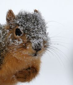Chilly Squirrel!