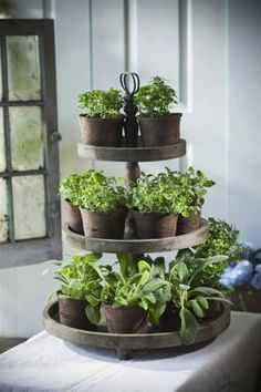 Even in winter we can still grow fresh herbs. In most regions the herb garden is now dormant, but with a little planning you can grow many culinary herbs indoors this winter. An indoor herb garden is not only functional,… Continue Reading → Herb Garden In Kitchen, Diy Herb Garden, Kitchen Herbs, Garden Planters, Vegetable Garden, Garden Ideas, Diy Planters, Herbs Garden, Planter Ideas