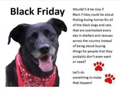 Black Friday! #pets #adopt #blackdogsyndrome