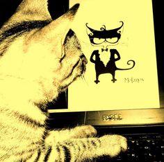A fellow cat stalking Motanov on Facebook