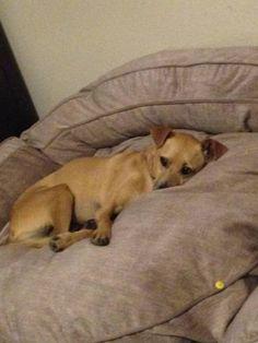 LOST DOG: 07/26/2017 - Maryvale Village, Phoenix, Arizona, AZ, United States. Ref#: L34180 - #CritterAlert #LostPet #LostDog #MissingDog