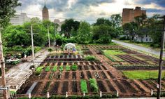 Cities around the world are establishing urban farms as platforms for community development and for education about sustainability, urban agriculture, and nutrition.