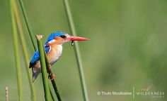 Smallest creatures in the Busanga Plains, Zambia
