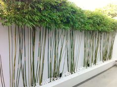 white bamboo planter - Google Search