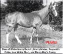 Tennessee Walking horse - Prides Generator #753925 home page by Walkers West
